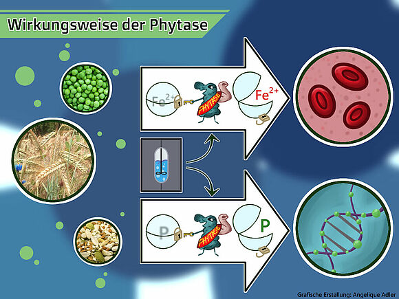 Studentische Projekte Nachhaltige Bioprozesstechnik (I24121-1)