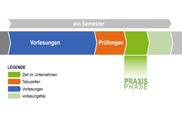Ablauf des Studienbegleitenden Traineeprogramms (I22226-1)