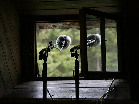 Vogelklang: Chor rund um den Erdball (I8294)