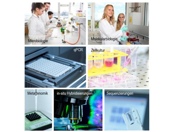 Labor für Molekulare Biomedizin (I10730-1)
