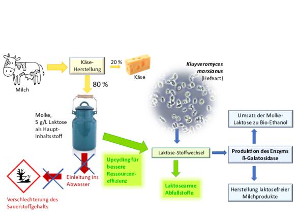 Studentische Projekte Nachhaltige Bioprozesstechnik (I27942-1)