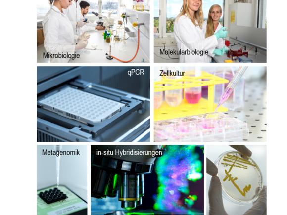 Molecular Biomedicine Lab (I10730-1)