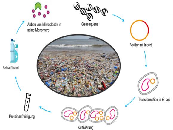 Nachhaltige Bioprozesstechnik - Aktuelles (I27944-1)