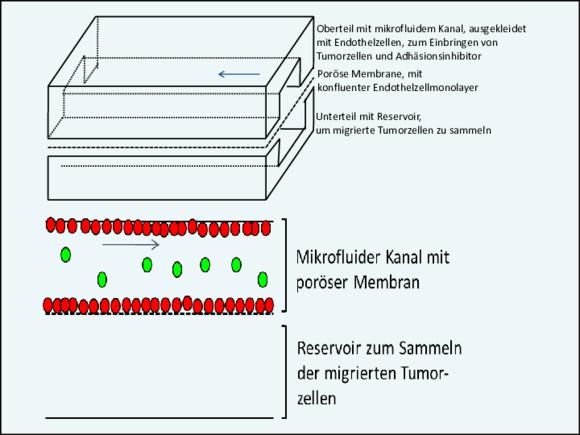 Forschung und Projekte Nachhaltige Bioprozesstechnik (I22215-1)